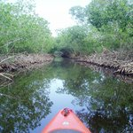 Mangrove canal to Rock Harbor
