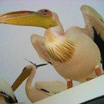 Walvis bay: pellicano sul catamarano