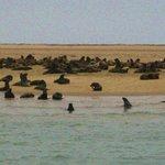 Walvis bay: le otarie lungo la costa