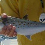 Fishing trip. Mackerel.