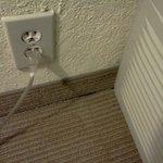 Bug by light socket