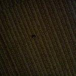 Bug on carpet