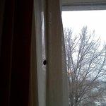 Bug on curtain