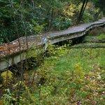 The raised trail through the swamp