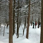 Through the woods, we snowshoed