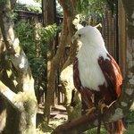 Bird Park 006