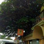 Photo de Hotel Tree House