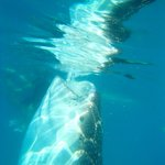 At the Whale Sharks point