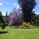 Botanic Gardens - beautiful trees