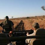 Safari al Sabi Sand