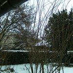 jardin en janvier sous la neige