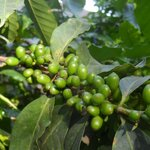 Duliti Lodge Coffee Beans