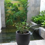 This picture took place in the public restroom lobby level. Nice mini garden