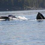 Ausflug zur Walbeobachtung