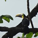 toucan in tree outside our room