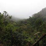 Curi-Cancha Reserve