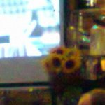 Novocento - sunflowers and sports