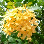 The garden has many beautiful flowers