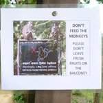 A polite request - the monkeys keep themselves to themselves and are fascinati