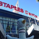 Pidge at the Staples Center