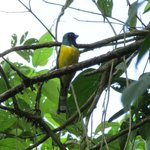 easily seen trogon from the trail
