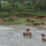 The hotel is located direct at the river where the elephants have their bath twice a day