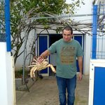 This crab was being delivered to the restaurant. A light sna