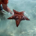Huge star fish while kayaking
