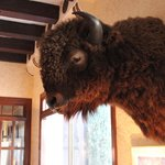 Buffalo in lobby