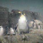 El majestuoso pingüino emperador.