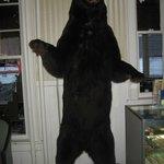 bear at hotel/restaurant we ate at