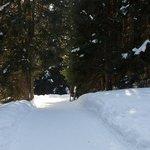 Arosa : le sentier des écureuils