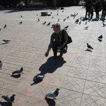 de duiven bij de fontein