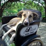 Socialized pets are welcome & Savannah is Dog Friendly!
