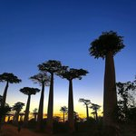 sunset at the baobabs