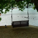 Swing underneath a huge shade tree over the waters edge toward Portobelo