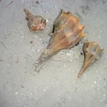 Shells in the ocean in front of the resort
