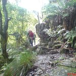 Magical Afro-montane forest