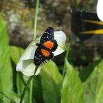 borboleta no jardim