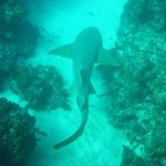 This is a view from one of our scuba diving trips- a 10 foot