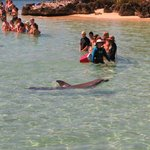 Groups meeting the dolphins