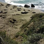 Elephant Seals Beach area-San Simeon, CA