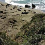 Elephant Seals Beach area-San Simeon, CA