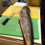 Mahi Mahi for our Fish Taco