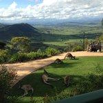 "Backyard view from ""rocky mountain Lodge"""