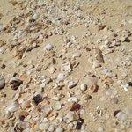 conchiglie e coralli