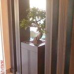 bonzai tree in the hotel