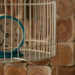 time cage
