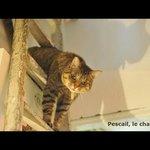 Le chat de la maison : Pescail !!!
