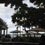 underneath the banyan tree